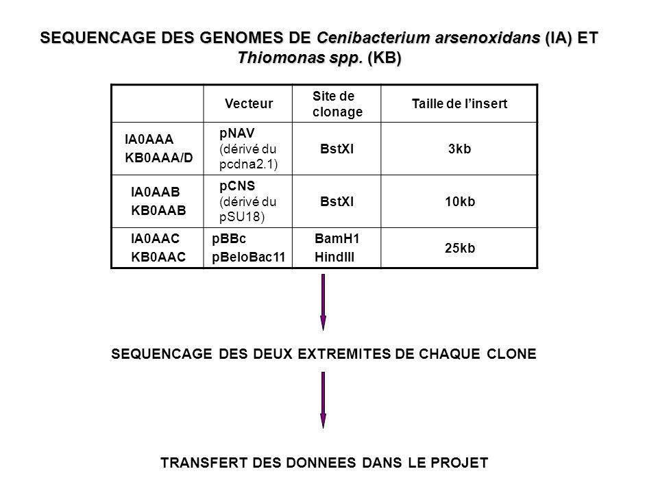 Comparaison des séquences contre une banque dADN ribosomique (RI>80 & RL>100) Comparaison des séquences contre une banque dIS (RI>80 & RL>100) ASSEMBLAGE SANS CES SEQUENCES Constitution dune banque de séquences répétées de plus de 500pb Comparaison des séquences contre cette banque de répétés (RI>80 & RL>100) RECHERCHE DE SEQUENCES REPETEES PAR NOSFERATU LISTE DE SEQUENCES A ELIMINER DE LASSEMBLAGE TRAITEMENTS DES SEQUENCES LISTES DE SEQUENCES A ELIMINER DE LASSEMBLAGE