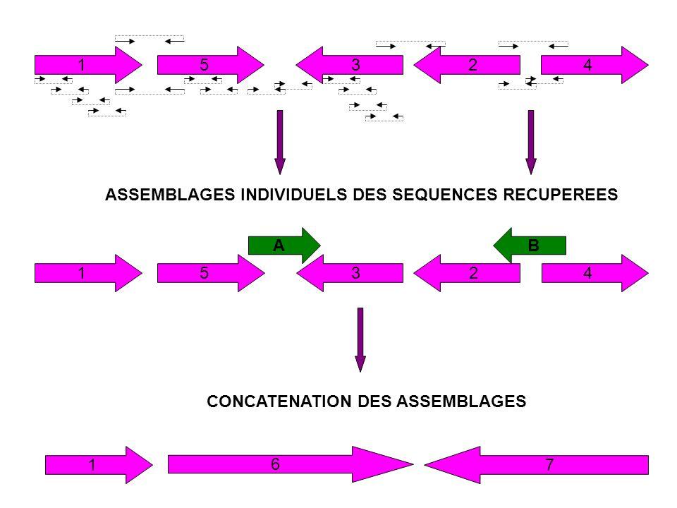 15324 ASSEMBLAGES INDIVIDUELS DES SEQUENCES RECUPEREES CONCATENATION DES ASSEMBLAGES 15324 AB 17 6