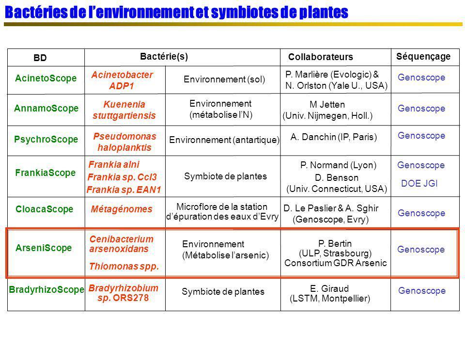Bactéries de lenvironnement et symbiotes de plantes BD Bactérie(s) Séquençage Collaborateurs AcinetoScope Acinetobacter ADP1 Environnement (sol) P. Ma
