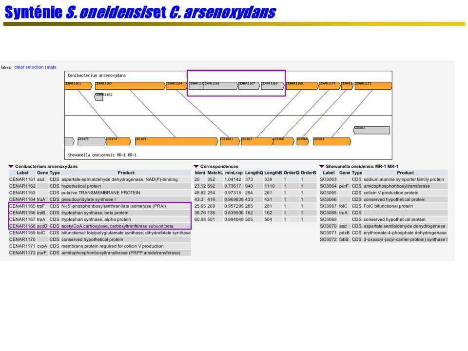 Synténie S. oneidensis et C. arsenoxydans
