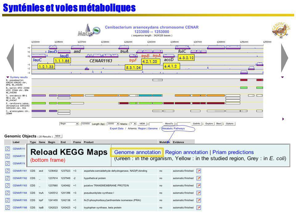 Synténies et voies métaboliques leuC leuD leuB asd CENAR1163 truA trpF trpB trpA accD folC 1.2.1.33 6.4.1.2 5.3.1.24 4.2.1.20 1.1.1.85 6.3.2.12