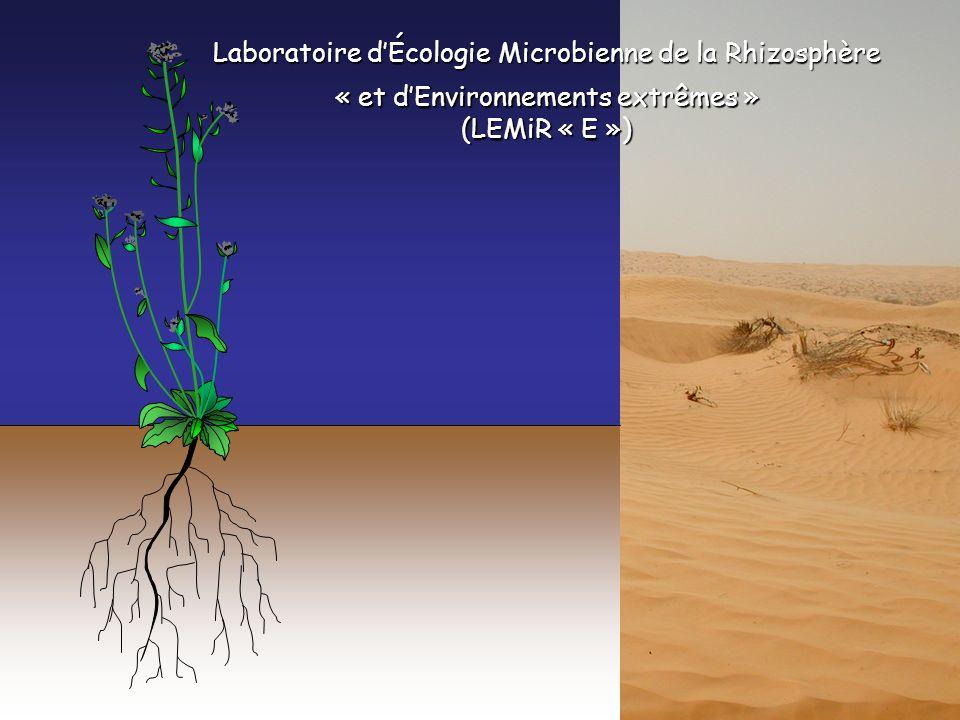 Laboratoire dÉcologie Microbienne de la Rhizosphère « et dEnvironnements extrêmes » (LEMiR « E »)