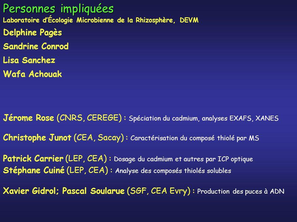 Personnes impliquées Jérome Rose (CNRS, CEREGE) : Spéciation du cadmium, analyses EXAFS, XANES Christophe Junot (CEA, Sacay) : Caractérisation du composé thiolé par MS Patrick Carrier (LEP, CEA) : Dosage du cadmium et autres par ICP optique Stéphane Cuiné (LEP, CEA) : Analyse des composés thiolés solubles Xavier Gidrol; Pascal Soularue (SGF, CEA Evry) : Production des puces à ADN Laboratoire dÉcologie Microbienne de la Rhizosphère, DEVM Delphine Pagès Sandrine Conrod Lisa Sanchez Wafa Achouak