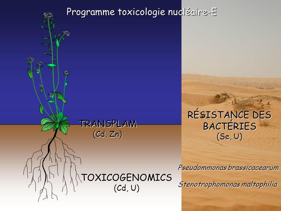 Programme toxicologie nucléaire-E TRANSPLAM (Cd, Zn) TOXICOGENOMICS (Cd, U) RÉSISTANCE DES BACTÉRIES (Se, U) Pseudommonas brassicacearum Stenotrophomonas maltophilia