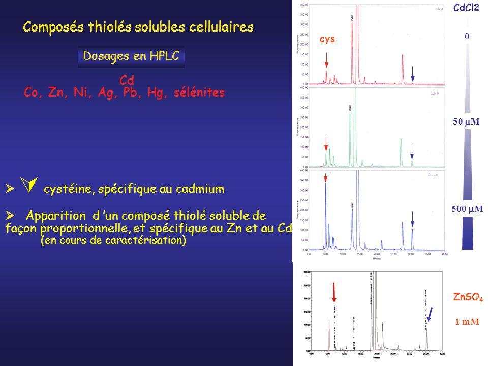 1 mM ZnSO 4 Apparition d un composé thiolé soluble de façon proportionnelle, et spécifique au Zn et au Cd (en cours de caractérisation) cystéine, spécifique au cadmium 50 M 500 M 0 CdCl2 cys Dosages en HPLC Cd Co, Zn, Ni, Ag, Pb, Hg, sélénites Composés thiolés solubles cellulaires