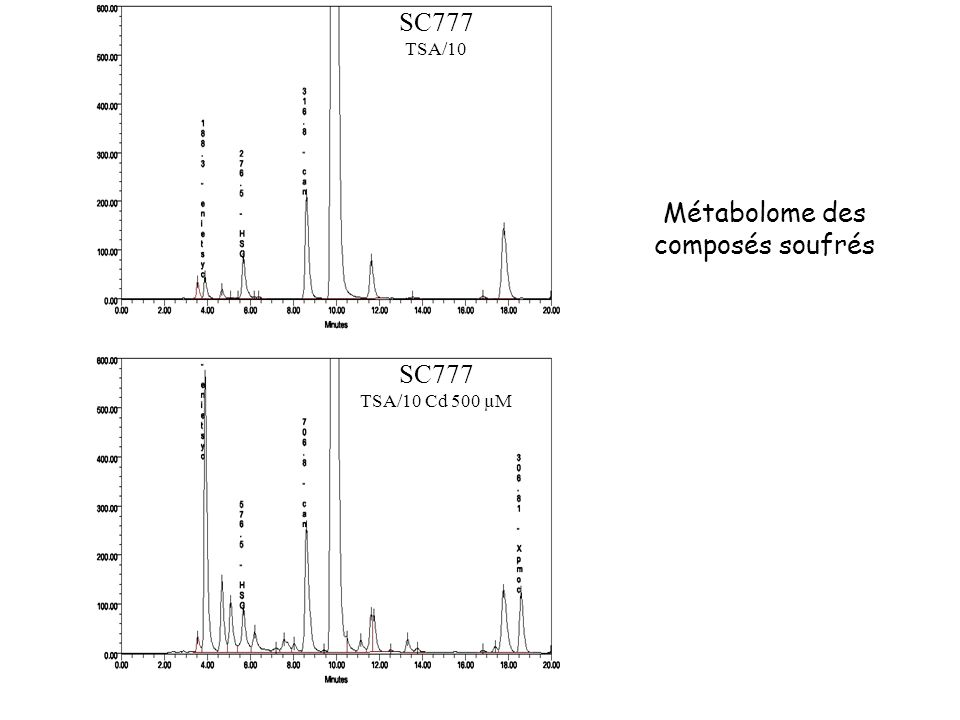 SC777 TSA/10 Cd 500 µM SC777 TSA/10 Métabolome des composés soufrés