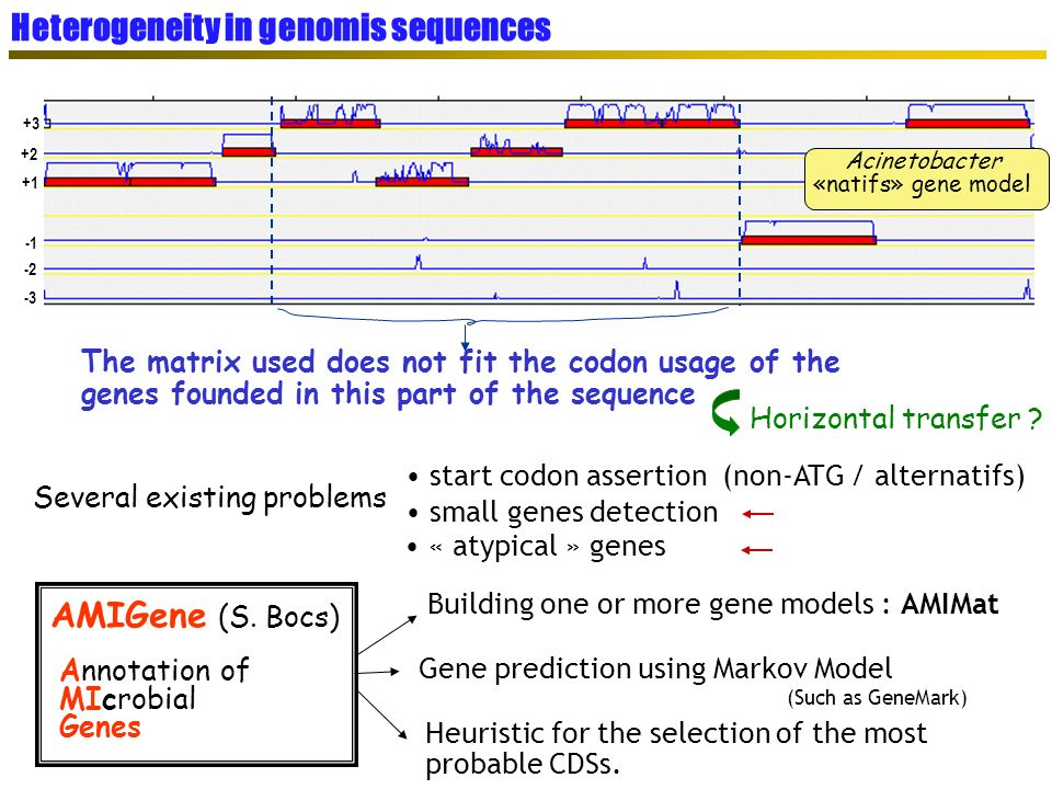+1 +2 +3 -2 -3 Acinetobacter «natifs» gene model The matrix used does not fit the codon usage of the genes founded in this part of the sequence Horizo