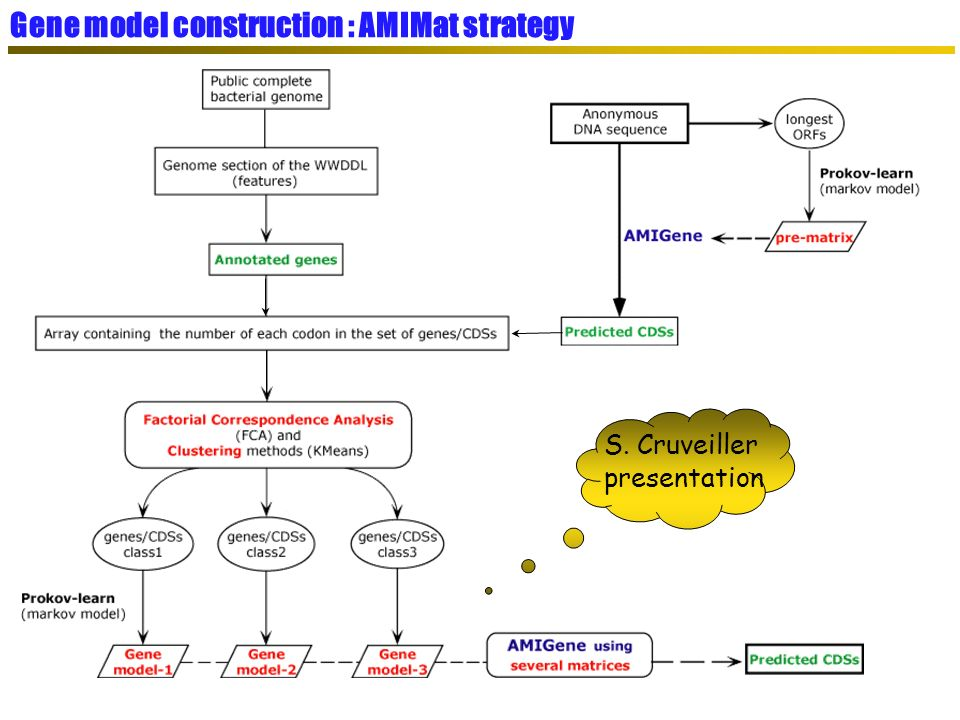 S. Cruveiller presentation Gene model construction : AMIMat strategy