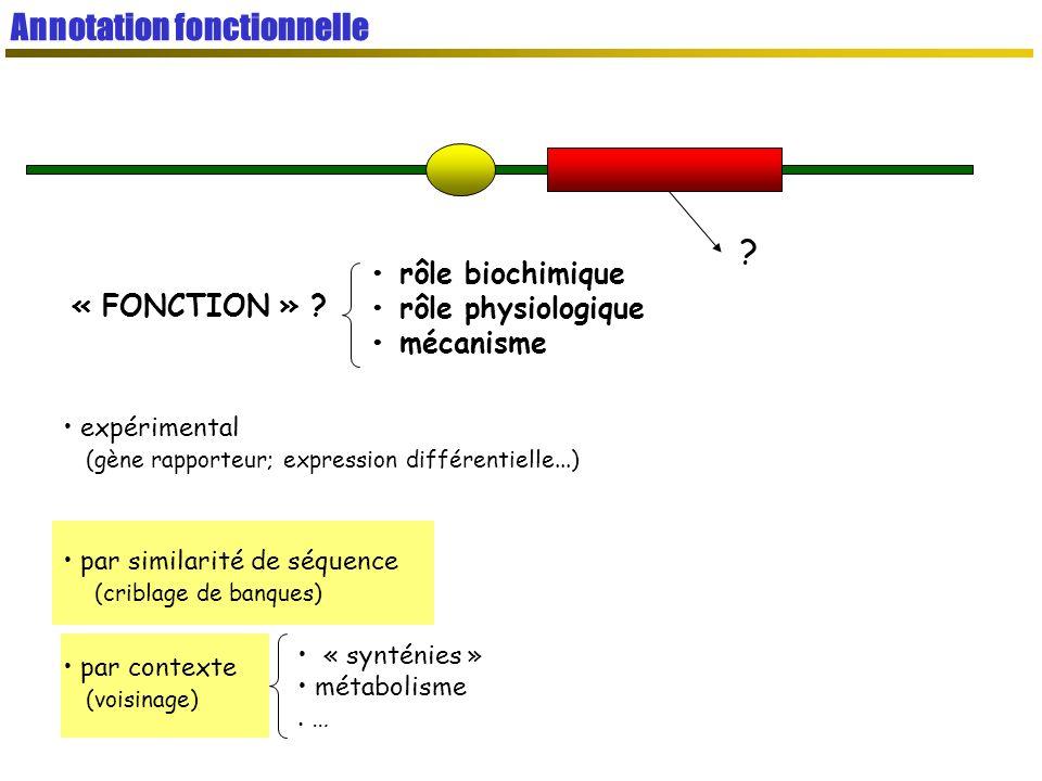 « FONCTION » .