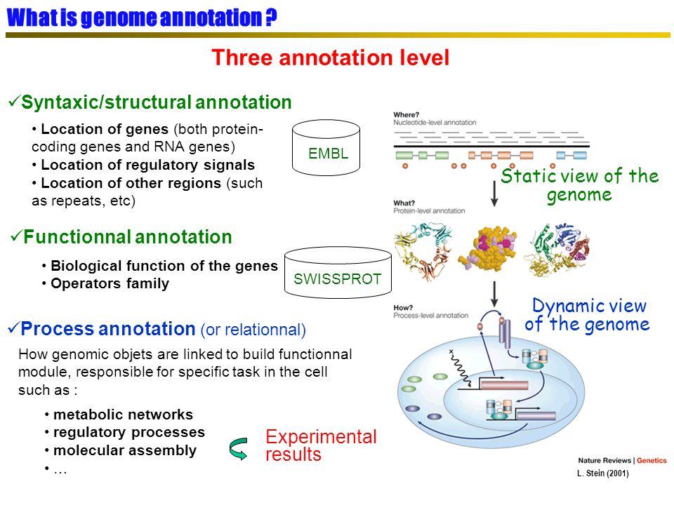 AMIGene : CDS prediction in bacterial genomes tRNA-scan : tRNA gene prediction (G.