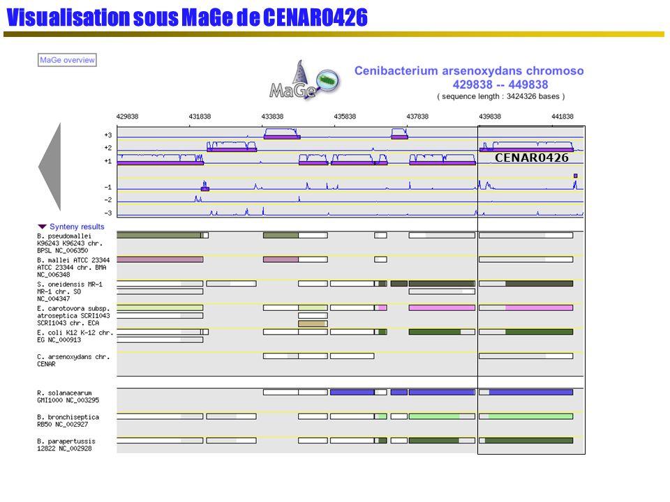 Visualisation sous MaGe de CENAR0426 CENAR0426
