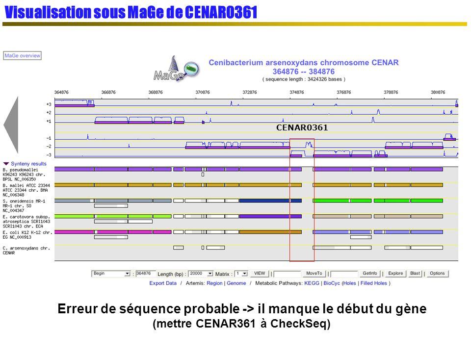 Visualisation sous MaGe de CENAR0361 CENAR0361 Erreur de séquence probable -> il manque le début du gène (mettre CENAR361 à CheckSeq)
