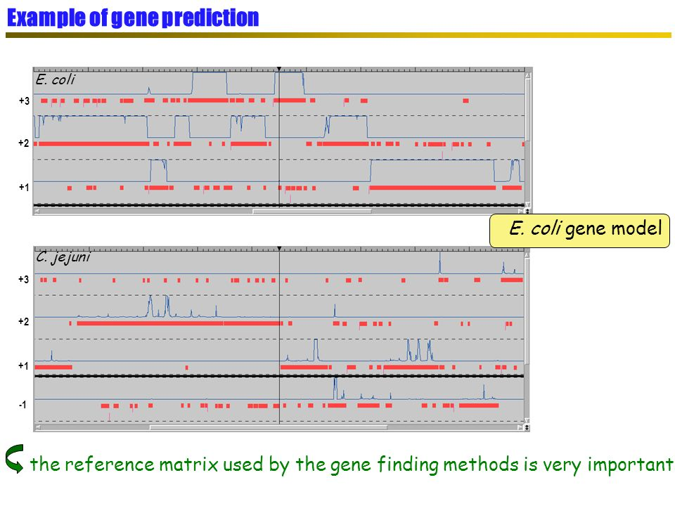 E. coli C. jejuni E. coli gene model the reference matrix used by the gene finding methods is very important ! +1 +2 +3 +1 +2 +3 Example of gene predi