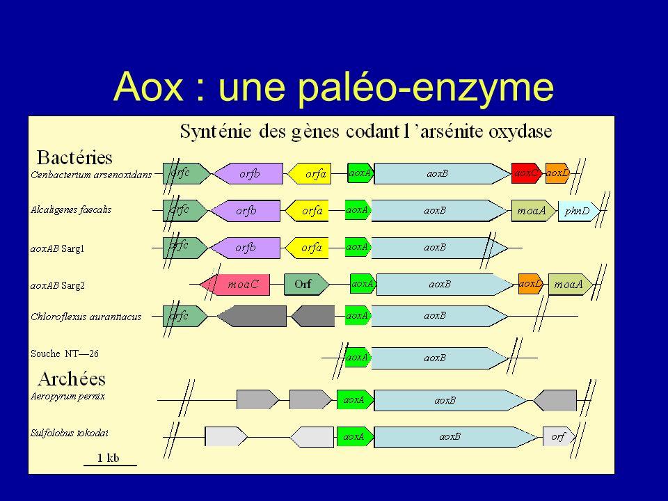 Aox : une paléo-enzyme Lebrun et al., 2003 AoxB AoxA