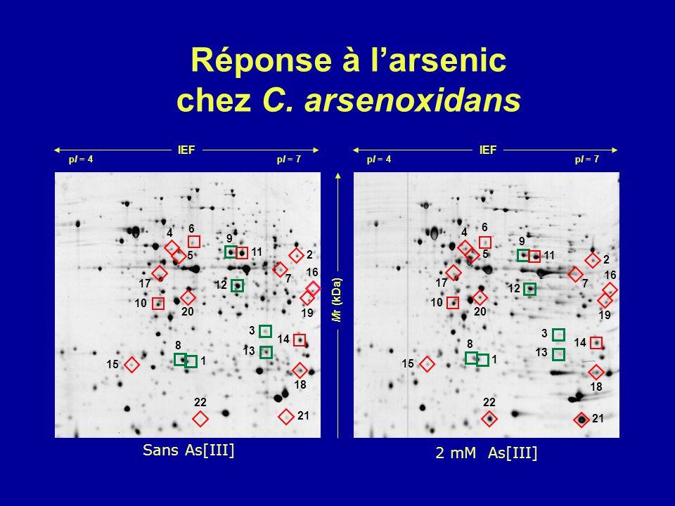 Réponse à larsenic chez C. arsenoxidans Mr (kDa) IEF pI = 4 pI = 7 21 9 9 10 22 11 12 1 1 2 2 13 14 15 18 3 3 19 16 17 4 4 5 5 6 6 7 7 20 8 8 Sans As[