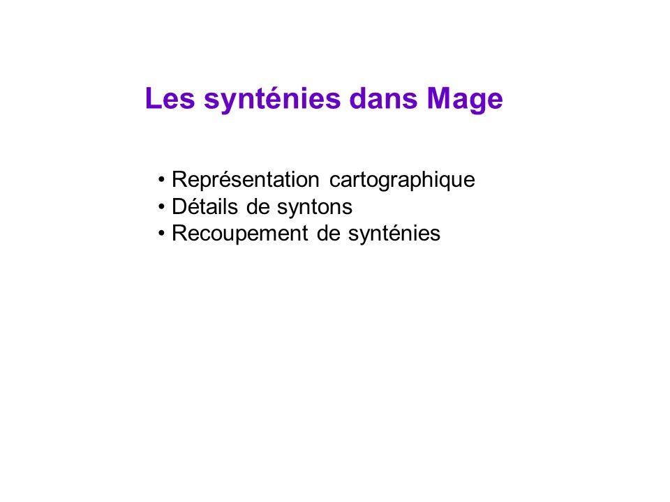 Représentation cartographique Détails de syntons Recoupement de synténies Les synténies dans Mage