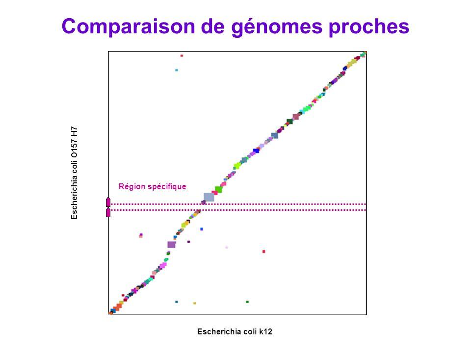Escherichia coli k12 Escherichia coli O157 H7 Région spécifique Comparaison de génomes proches