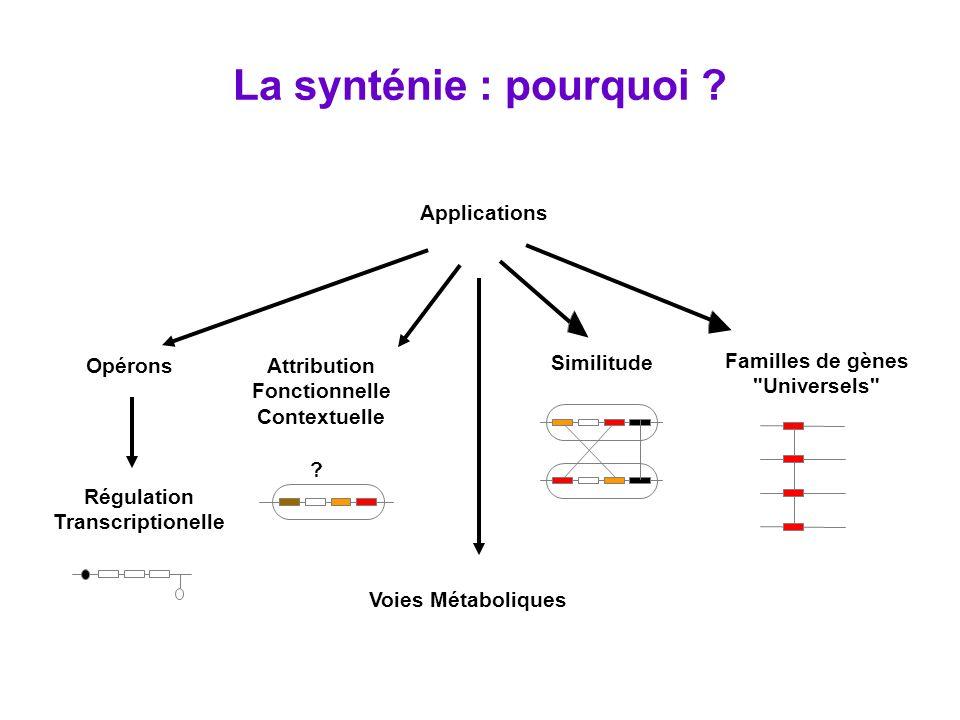 Génome A Génome B correspondance co-localisation Les gènes sont les nœuds du graphe et sont connectés par deux types darêtes : Relation de correspondance (inter génomes) principalement résultats de comparaisons de séquences (avec contraintes restrictives sur la similitude) mais aussi classifications fonctionnelles ou conservation de domaines protéiques Relation de co-localisation (intra génome) paramètre de gap qui autorise tous types de réarrangements => Lalgorithme développé recherche les groupes de gènes (syntons) qui vérifient ces deux relations.