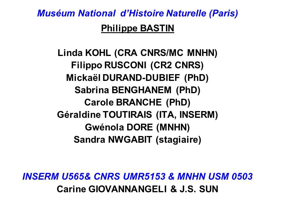 Muséum National dHistoire Naturelle (Paris) Philippe BASTIN Linda KOHL (CRA CNRS/MC MNHN) Filippo RUSCONI (CR2 CNRS) Mickaël DURAND-DUBIEF (PhD) Sabri