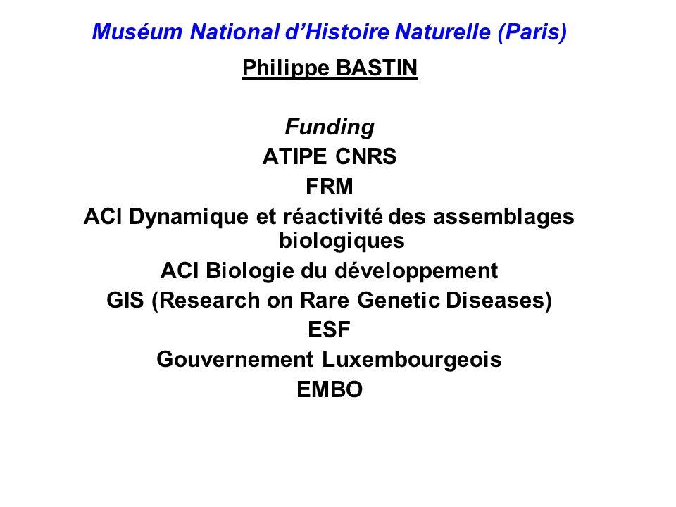 Muséum National dHistoire Naturelle (Paris) Philippe BASTIN Funding ATIPE CNRS FRM ACI Dynamique et réactivité des assemblages biologiques ACI Biologi
