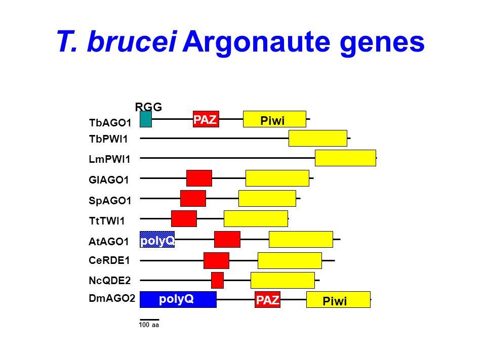 T. brucei Argonaute genes TbAGO1 Piwi PAZ TbPWI1 LmPWI1 GlAGO1 SpAGO1 TtTWI1 AtAGO1 CeRDE1 NcQDE2 DmAGO2 polyQ 100 aa RGG Piwi PAZ