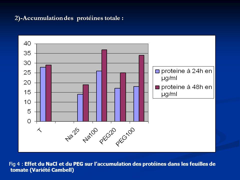 Fig 4 : Effet du NaCl et du PEG sur laccumulation des protéines dans les feuilles de tomate (Variété Cambell) 2)-Accumulation des protéines totale :