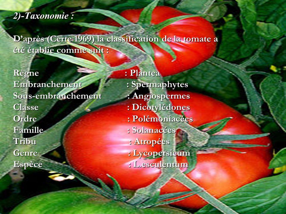 2)-Taxonomie : Daprès (Certe 1969) la classification de la tomate a été établie comme suit : Règne : Plantea Embranchement : Spermaphytes Sous-embranc