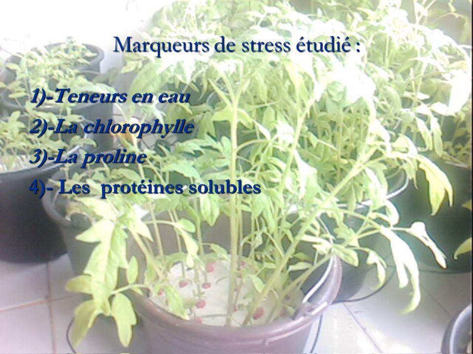 Marqueurs de stress étudié : 1)-Teneurs en eau 1)-Teneurs en eau 2)-La chlorophylle 2)-La chlorophylle 3)-La proline 3)-La proline 4)- Les protéines s