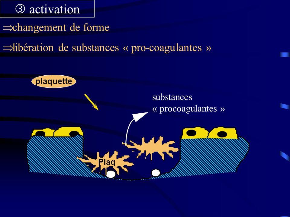 plaquette Plaq substances « procoagulantes » activation changement de forme libération de substances « pro-coagulantes »