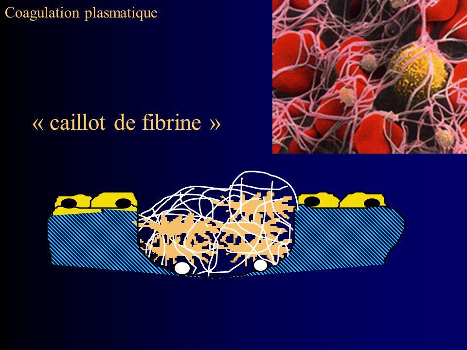 Coagulation plasmatique « caillot de fibrine »