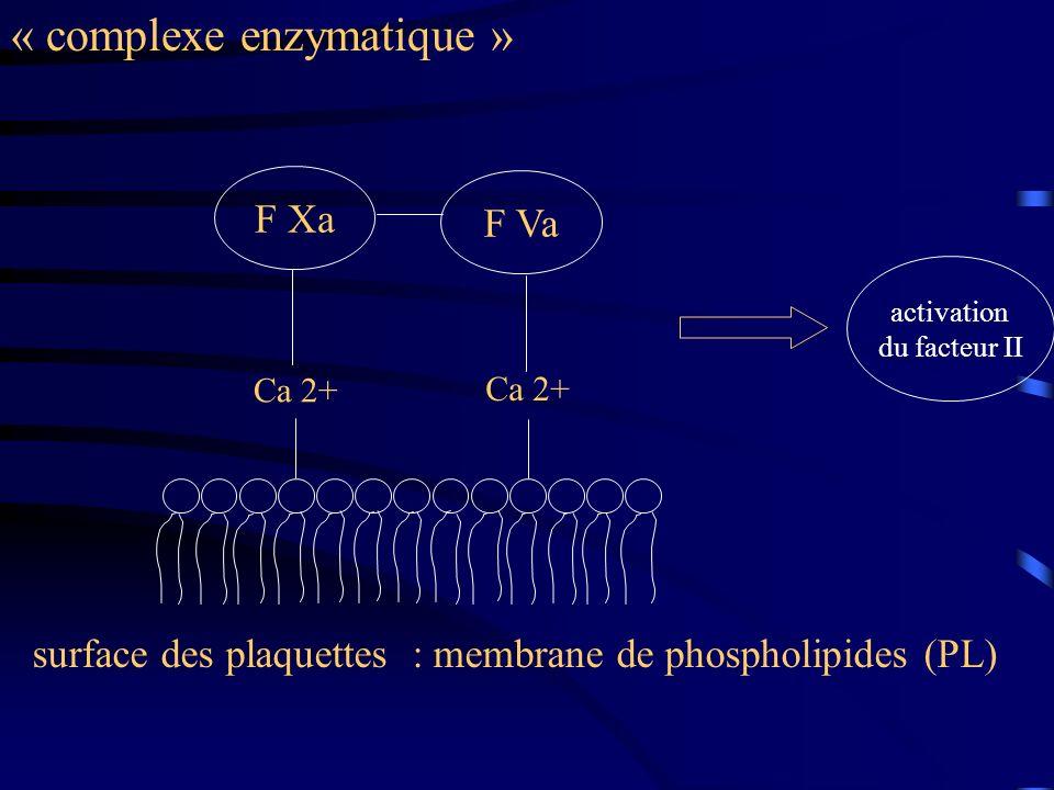 « complexe enzymatique » Ca 2+ F Xa F Va surface des plaquettes : membrane de phospholipides (PL) activation du facteur II