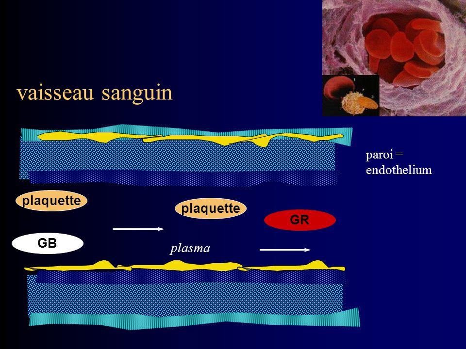 paroi = endothelium vaisseau sanguin plaquette GB GR plasma