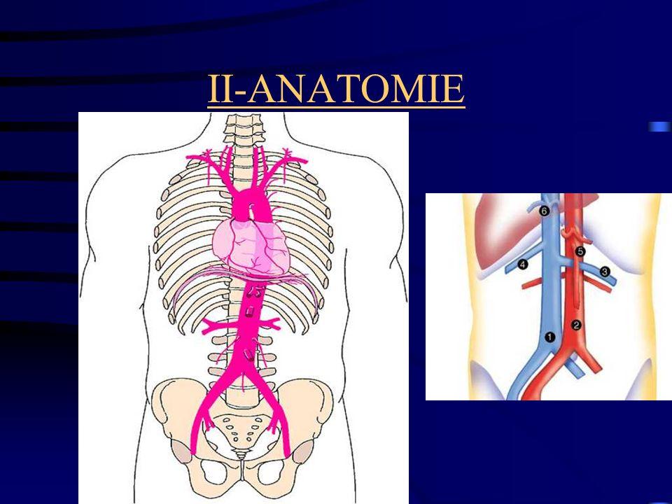 II-ANATOMIE