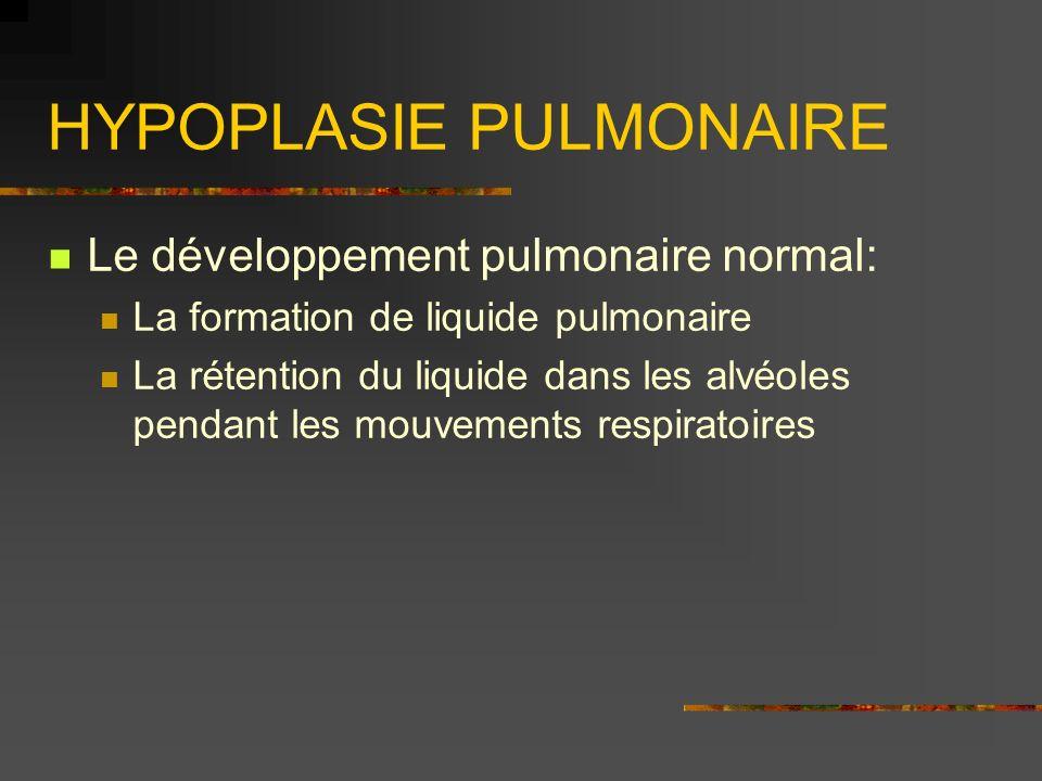 HYPOPLASIE PULMONAIRE Le développement pulmonaire normal: La formation de liquide pulmonaire La rétention du liquide dans les alvéoles pendant les mou
