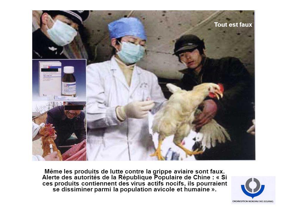 Même les produits de lutte contre la grippe aviaire sont faux. Alerte des autorités de la République Populaire de Chine : « Si ces produits contiennen