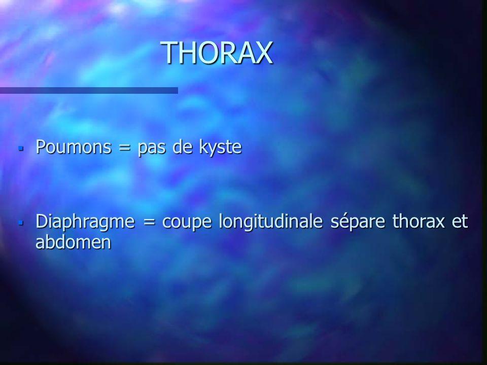 Poumons = pas de kyste Poumons = pas de kyste Diaphragme = coupe longitudinale sépare thorax et abdomen Diaphragme = coupe longitudinale sépare thorax
