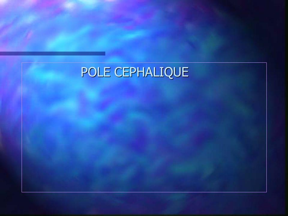 POLE CEPHALIQUE POLE CEPHALIQUE