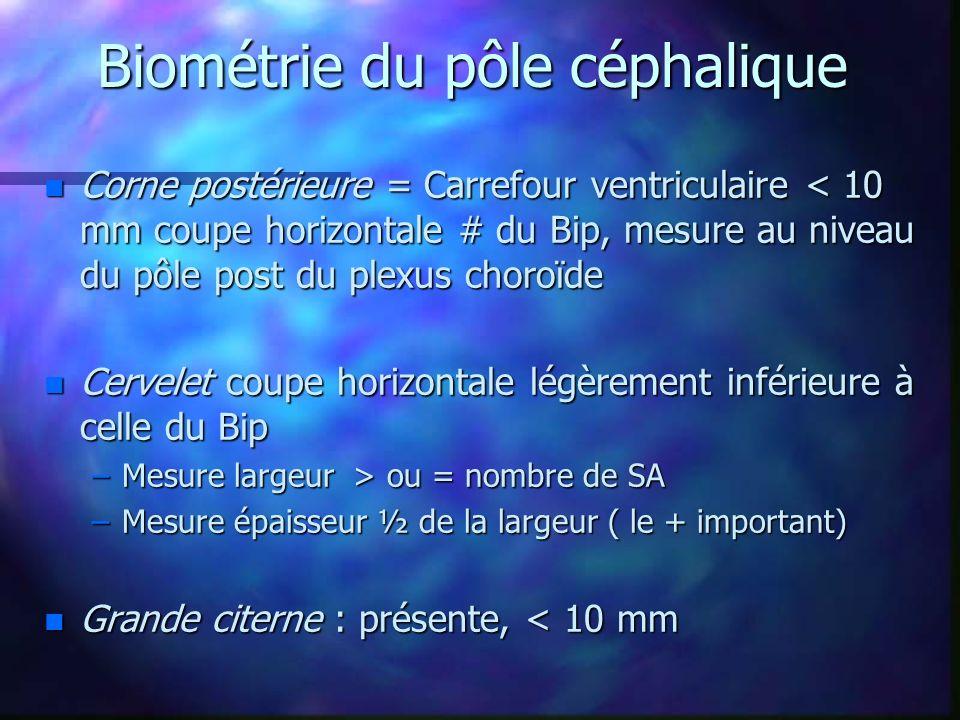 Biométrie du pôle céphalique n Corne postérieure = Carrefour ventriculaire < 10 mm coupe horizontale # du Bip, mesure au niveau du pôle post du plexus choroïde n Cervelet coupe horizontale légèrement inférieure à celle du Bip –Mesure largeur > ou = nombre de SA –Mesure épaisseur ½ de la largeur ( le + important) n Grande citerne : présente, < 10 mm