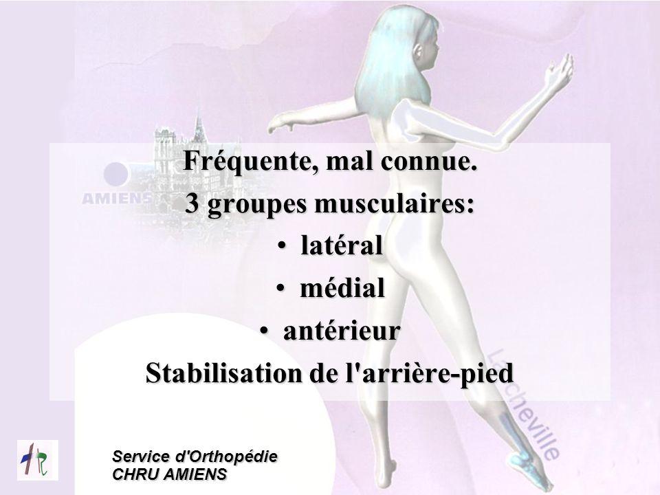 Service d'Orthopédie CHRU AMIENS Fréquente, mal connue. 3 groupes musculaires: latérallatéral médialmédial antérieurantérieur Stabilisation de l'arriè