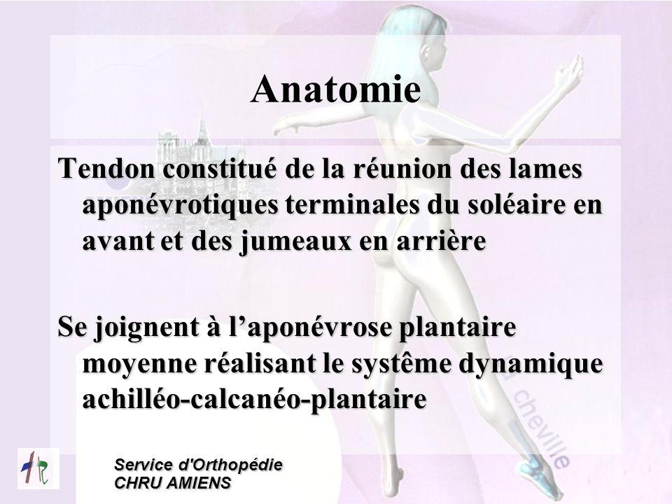 Service d'Orthopédie CHRU AMIENS Anatomie Tendon constitué de la réunion des lames aponévrotiques terminales du soléaire en avant et des jumeaux en ar