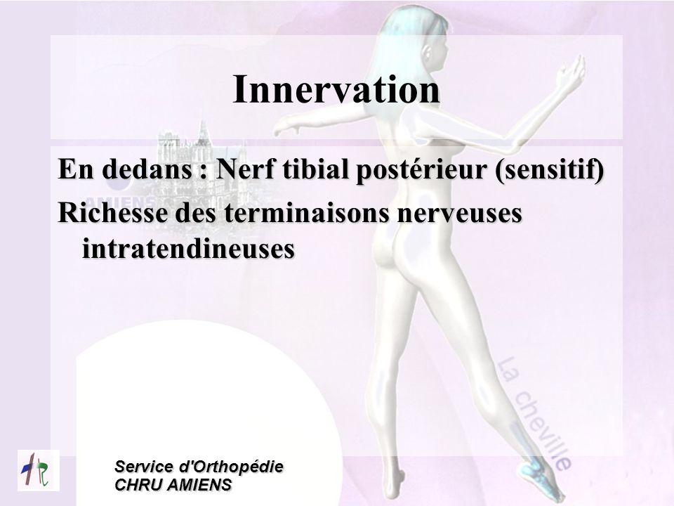 Service d'Orthopédie CHRU AMIENS Innervation En dedans : Nerf tibial postérieur (sensitif) Richesse des terminaisons nerveuses intratendineuses