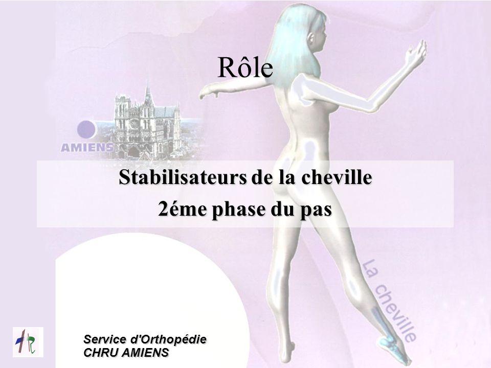 Service d'Orthopédie CHRU AMIENS Rôle Stabilisateurs de la cheville 2éme phase du pas