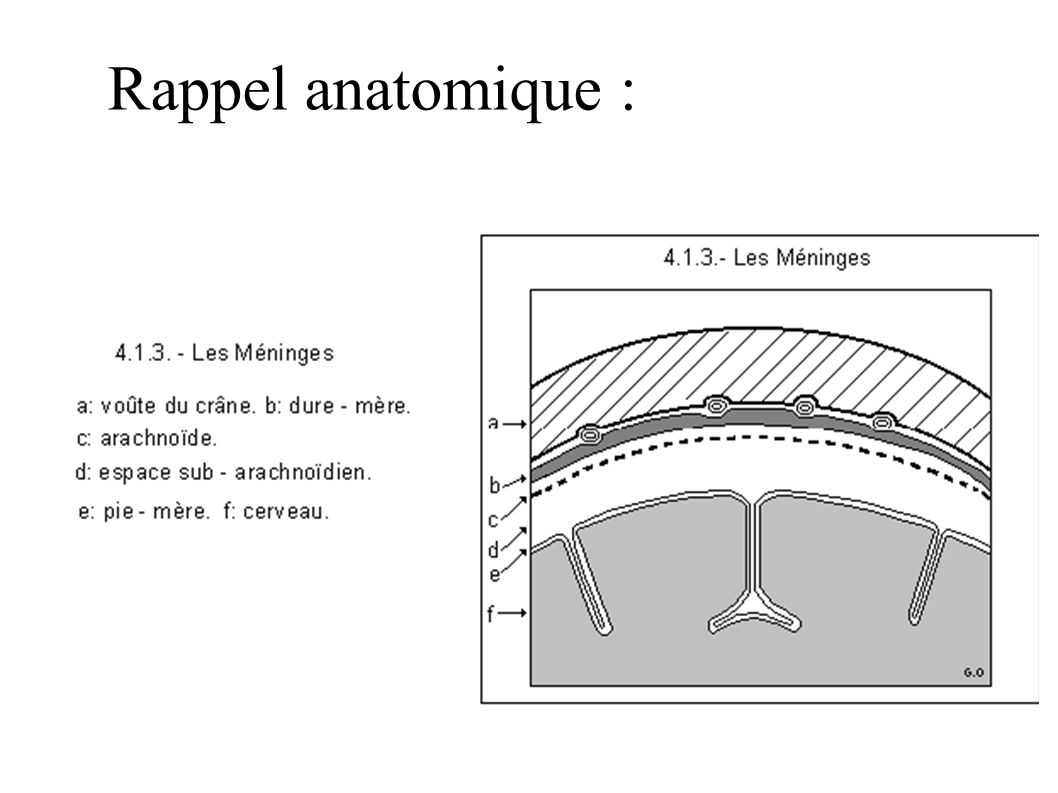 Rappel anatomique :