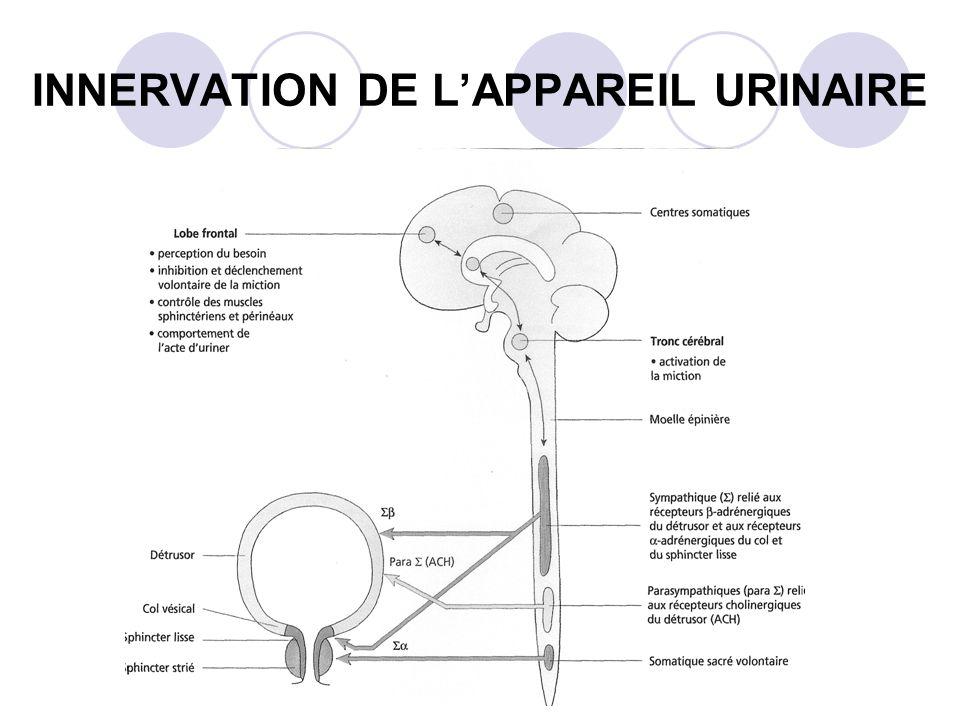 INNERVATION DE LAPPAREIL URINAIRE