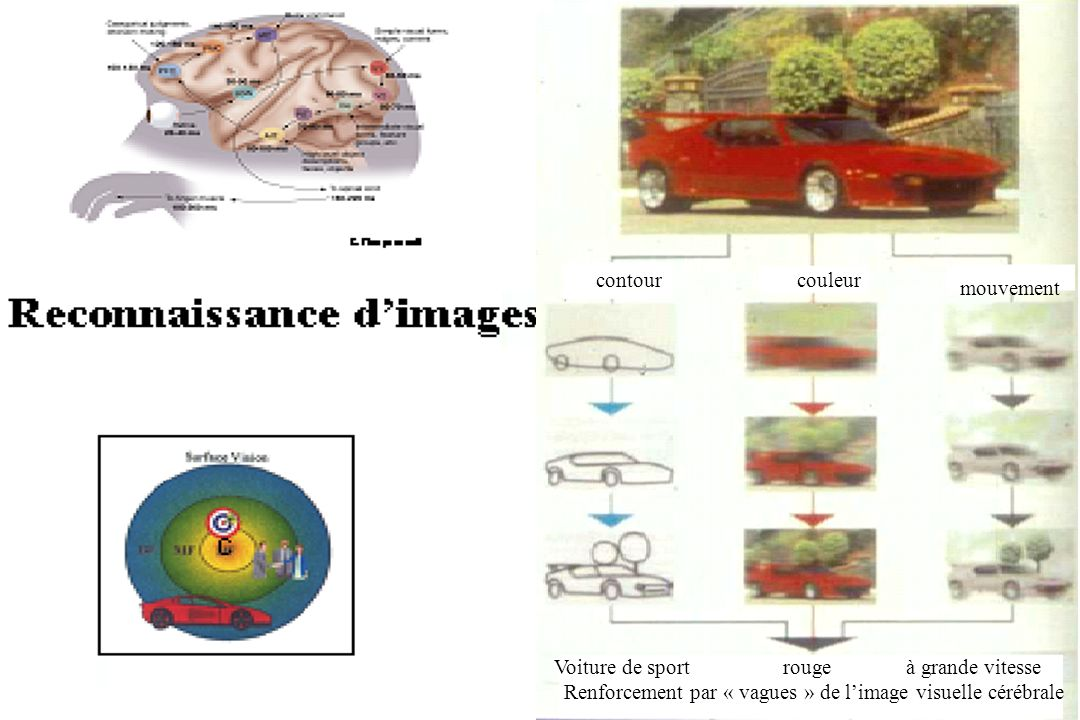 contourcouleur mouvement Voiture de sport rouge à grande vitesse Renforcement par « vagues » de limage visuelle cérébrale
