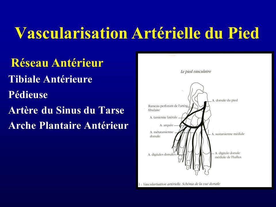 Vascularisation Artérielle du Pied Réseau Antérieur Tibiale Antérieure Pédieuse Artère du Sinus du Tarse Arche Plantaire Antérieur