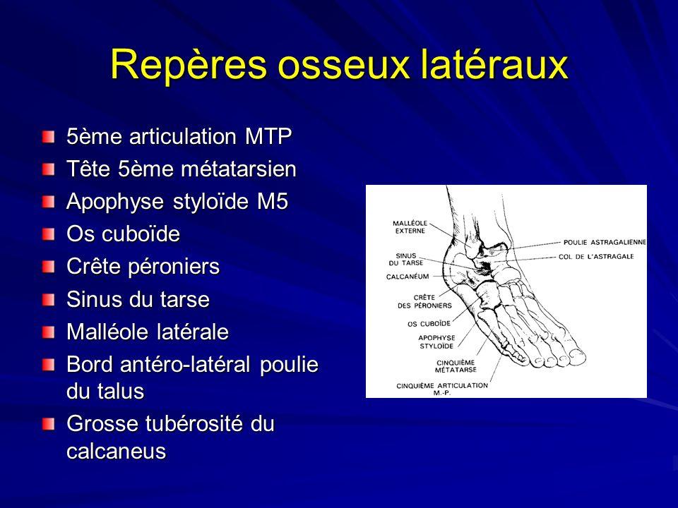 Repères osseux latéraux 5ème articulation MTP Tête 5ème métatarsien Apophyse styloïde M5 Os cuboïde Crête péroniers Sinus du tarse Malléole latérale B