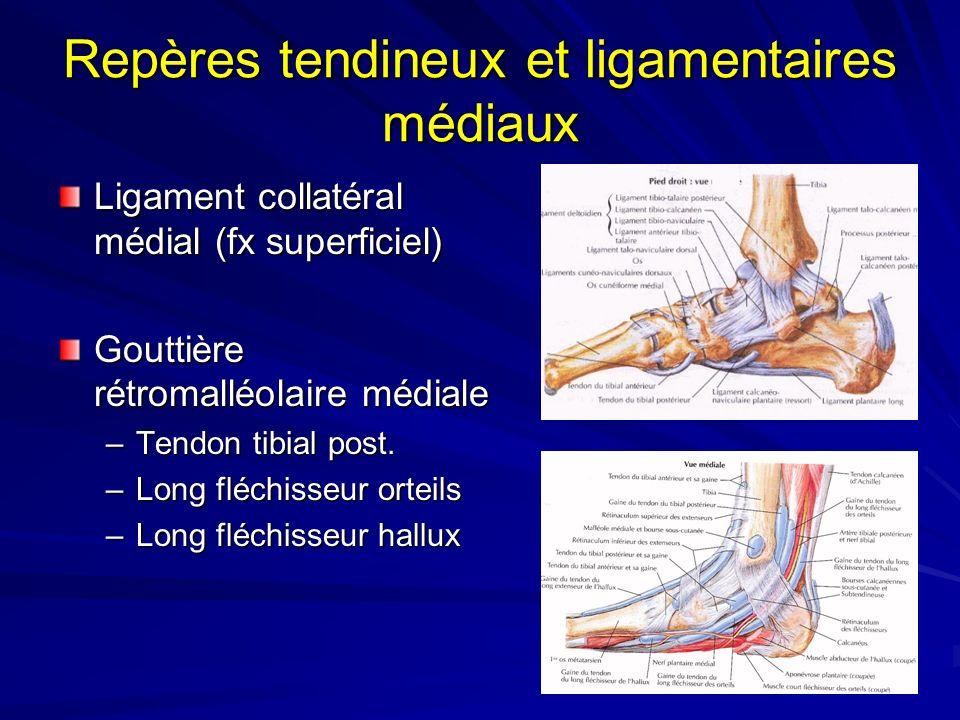 Repères tendineux et ligamentaires médiaux Ligament collatéral médial (fx superficiel) Gouttière rétromalléolaire médiale –Tendon tibial post. –Long f
