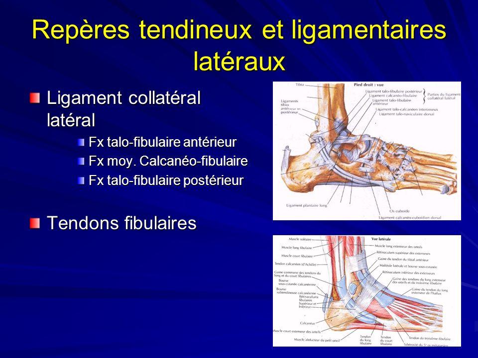 Repères tendineux et ligamentaires latéraux Ligament collatéral latéral Fx talo-fibulaire antérieur Fx moy. Calcanéo-fibulaire Fx talo-fibulaire posté