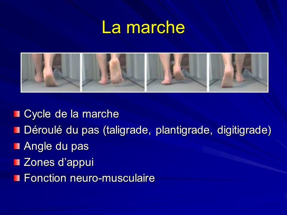 La marche Cycle de la marche Déroulé du pas (taligrade, plantigrade, digitigrade) Angle du pas Zones dappui Fonction neuro-musculaire